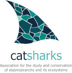 Catsharks, Institute of Marine Sciences (ICM-CSIC), Barcelona (Spain)