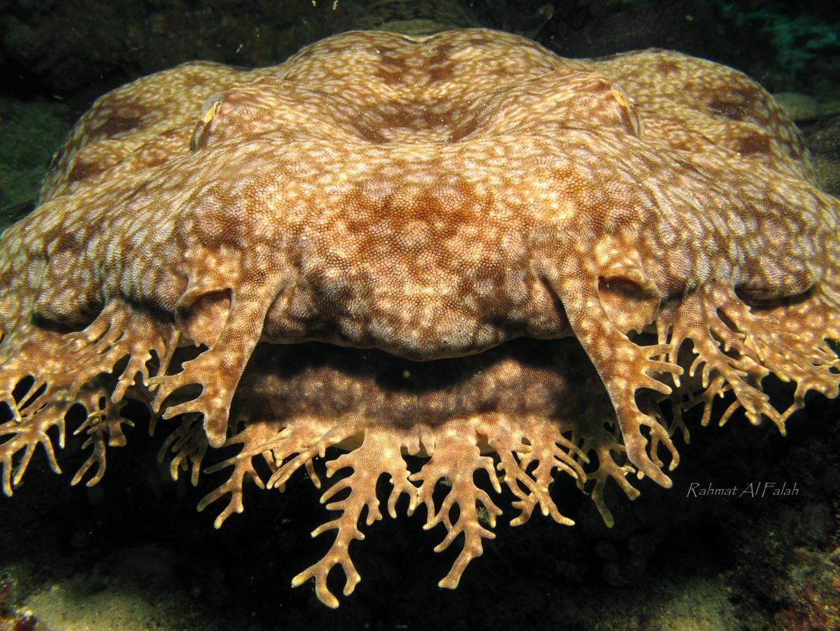 El mundo animal tibur n alfombra for Alfombras el mundo